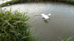 /theme/mini tow plane/12-floating-on-water